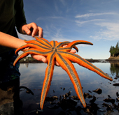 TIDE POOLING - Explore the magical underwater world at low tide